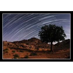 تابلو راه شیری و درخت روییده در سنگ